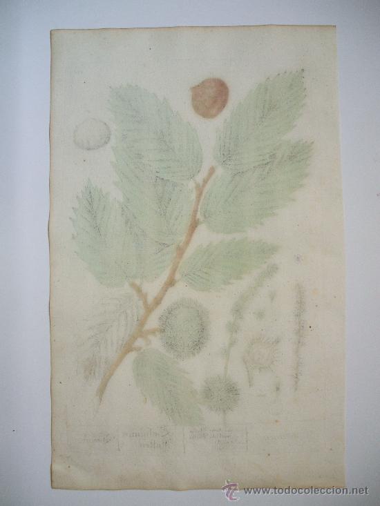 Arte: CASTAÑO - 1760 - Foto 2 - 23641284