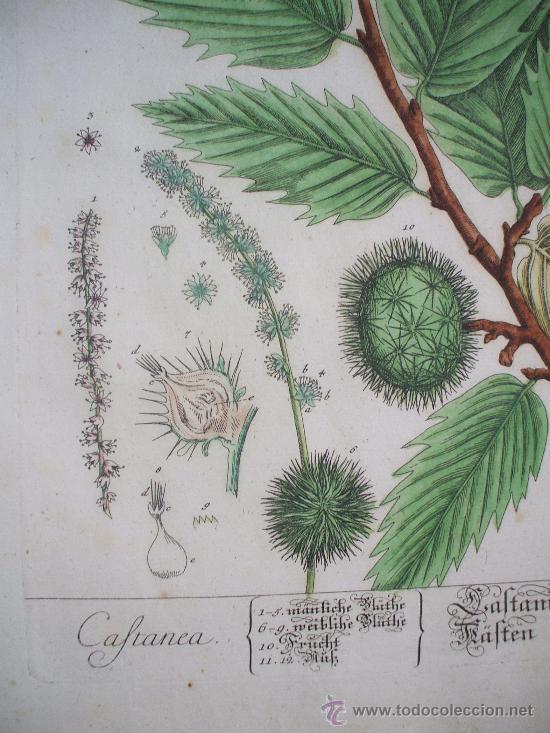 Arte: CASTAÑO - 1760 - Foto 3 - 23641284