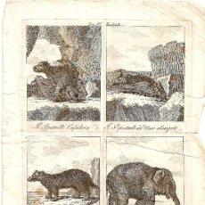Arte: GRABADO 4 ANIMALES SIGLO XVIII, PIPISTRELLO CEFALOTA,PIPISTRELLO DEL MUSO ALLUNGATO,CRABIER,ELEFANTA. Lote 27486230