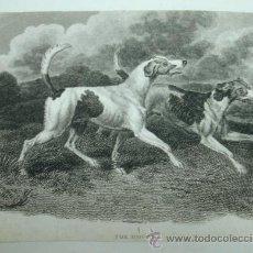 Arte: FOX HOUNDS. PERROS DE CAZA BUSCADORES DE ZORROS. (12,5 X 17,5 CM.). Lote 30019020