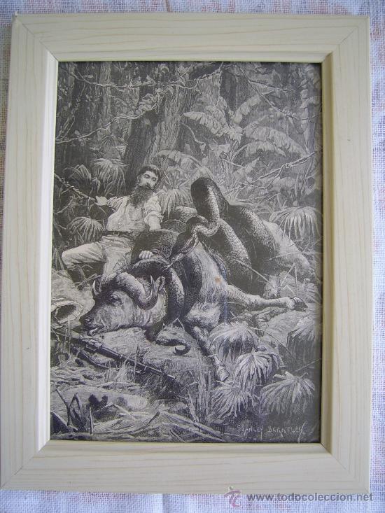 ataque de un piton - grabado antiguo 1879 - muc - Comprar Grabados ...