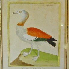 Arte: OYE DU CAP DE BONNE ESPERANCE. FRANÇOIS NICOLAS MARTINET. SIGLO XVIII.. Lote 34418065