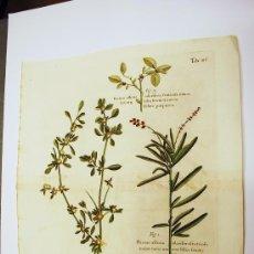 Arte: BOTÁNICA. GRABADO ORIGINAL DEL SIGLO XVIII. PLANTAS. ILUMINADO A MANO DE ÉPOCA.. Lote 34750585