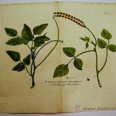 Arte: BOTÁNICA. GRABADO ORIGINAL DEL SIGLO XVIII. PLANTAS. ILUMINADO A MANO DE ÉPOCA.. Lote 34750645