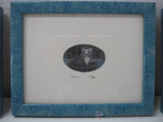 Arte: 3 bellos grabados Giorgio Ferrari firmados y numerados - gatos gatitos - miniaturas - Foto 2 - 35223969