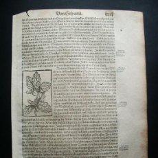 Arte: 1590- COSMOGRAFIA MÜNSTER.CANTABRIA.BASCONIA.ARAGÓN.GRANADA.GALICIA.GRABADO BELLOTAS ENCINA.HISTORIA. Lote 175655069