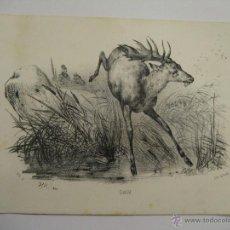 Art: GRABADO DE ANIMALES. Lote 28328896