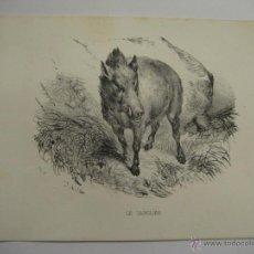 Art: GRABADO DE ANIMALES (LE SANGLIER) DEL LIBRO HISTORIA NATURAL PUBLICADO EN PARÍS. Lote 28328950