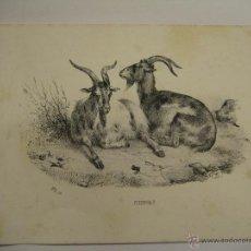 Art: GRABADO DE ANIMALES (CHEVRES) DEL LIBRO HISTORIA NATURAL PUBLICADO EN PARÍS. Lote 28328961
