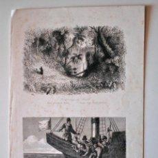 Arte: GRABADOS SIGLO XIX. BOSQUE VIRGEN DE BRASIL. MARTIRIO DE ACEVEDO . Lote 42446154