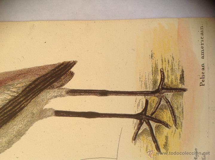 Arte: Grabado coloreado a la acuarela. - Foto 2 - 45362891