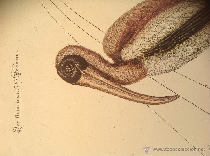 Arte: Grabado coloreado a la acuarela. - Foto 4 - 45362891