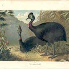 grab.antig.1884 CASAWARIS
