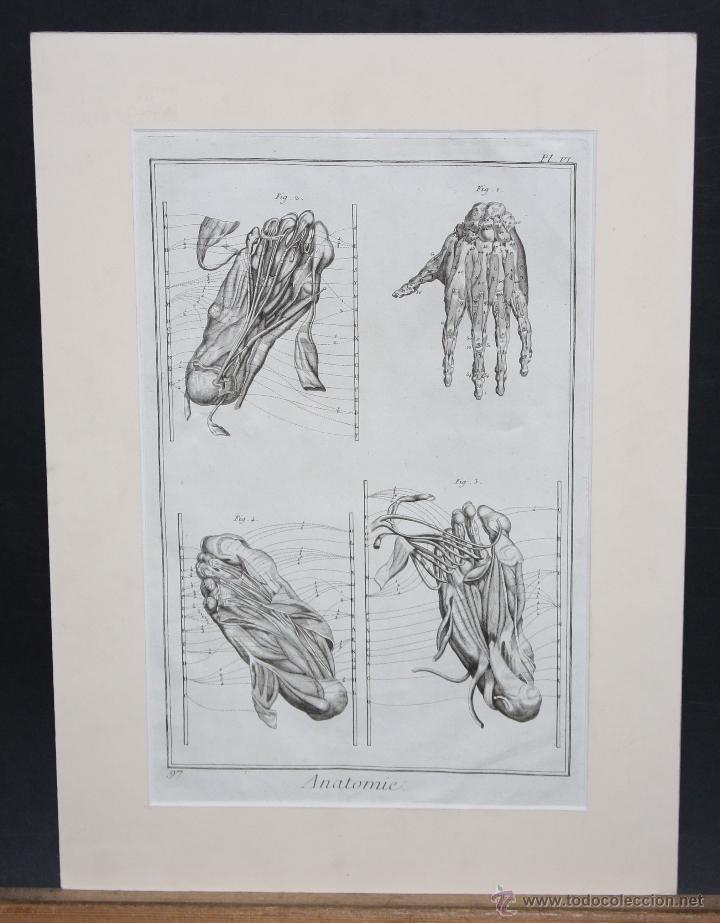 """GRABADO EN PLANCHA DE ACERO DEL SIGLO XVIII DE LA OBRA """"ANATOMIE"""" (Arte - Grabados - Antiguos hasta el siglo XVIII)"""