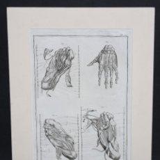 """Arte: GRABADO EN PLANCHA DE ACERO DEL SIGLO XVIII DE LA OBRA """"ANATOMIE"""". Lote 46886360"""
