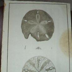Arte: PEROUSE. GRAVÉ DU GROS OURSIN DE LA COTE DU N.O DE L'AMERIQUE. Nº 28. AÑO 1787. Lote 49994226