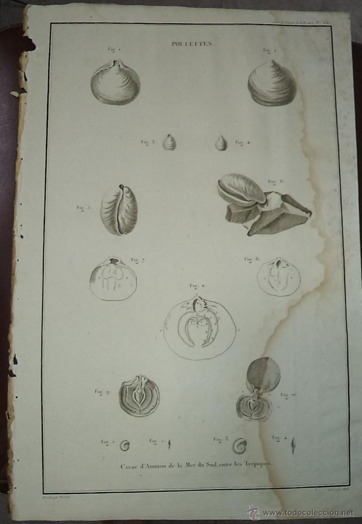 PEROUSE. GRAVÉ DU POULETTES. Nº 65. AÑO 1787 (Arte - Grabados - Antiguos hasta el siglo XVIII)