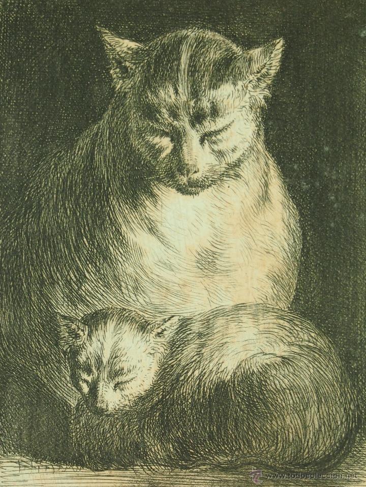 Resultado de imagen para gatos francia siglo XVIII