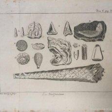 Arte: GRABADO LIBRO DE CIENCIAS SXVIII. Lote 56617344