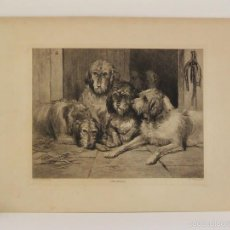 Arte: OTTER HOUNDS - AGUAFUERTE 1893. Lote 57372949