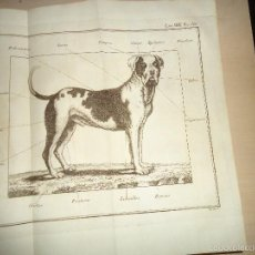 Arte: GRABADO - PERRO - MIGUEL GAMBORINO - 24X31 - SIGLO XVIII Ó XIX. Lote 59712403