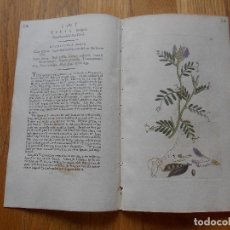 Arte: GRABADO BOTANICA LAEVIGATA VICIA, EN COLOR, ORIGINAL 1798, . Lote 75109155