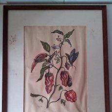 Arte: GRABADO DE MARIA SIBYLLAN MERIAN PIPER INDICUM. Lote 83803480