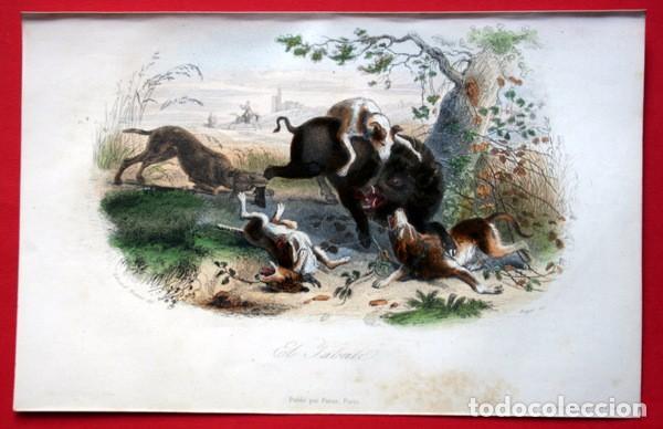 Arte: EL JABALI - GRABADO COLOR DE 1856 - ORIGINAL - 240x155mm - Foto 2 - 85184568