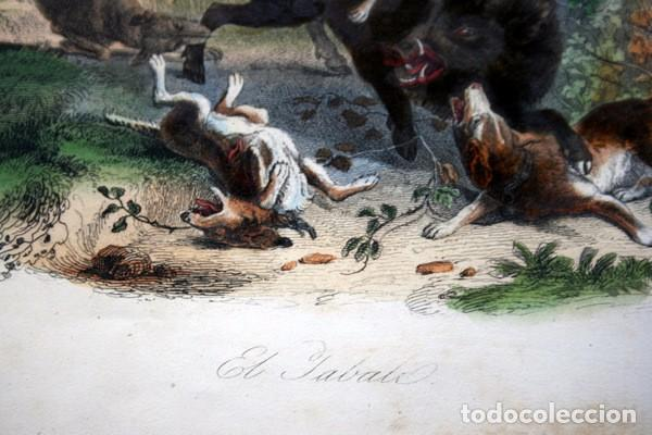 Arte: EL JABALI - GRABADO COLOR DE 1856 - ORIGINAL - 240x155mm - Foto 3 - 85184568