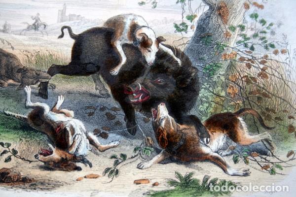 Arte: EL JABALI - GRABADO COLOR DE 1856 - ORIGINAL - 240x155mm - Foto 4 - 85184568