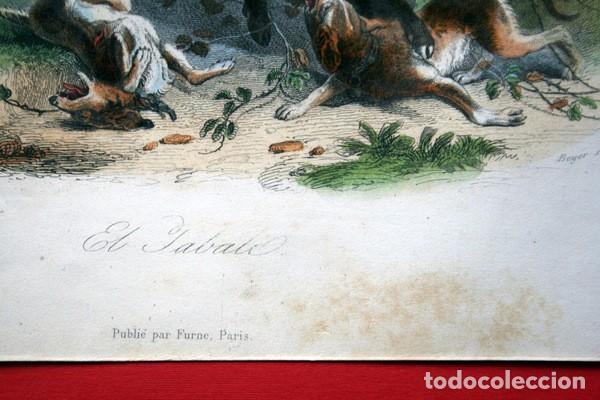 Arte: EL JABALI - GRABADO COLOR DE 1856 - ORIGINAL - 240x155mm - Foto 5 - 85184568