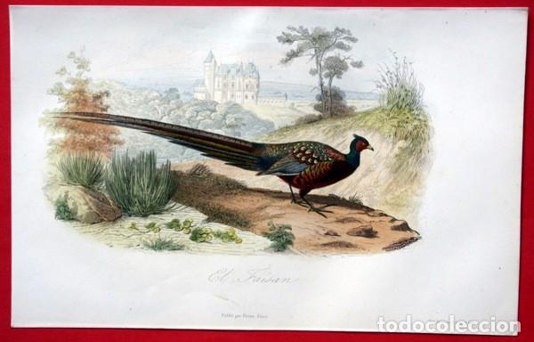 EL FAISAN - GRABADO COLOR DE 1856 - ORIGINAL - 240X151MM (Arte - Grabados - Modernos siglo XIX)