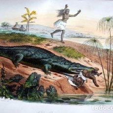 Arte: EL COCODRILO - GRABADO COLOR DE 1856 - ORIGINAL - 240X154MM. Lote 85345616