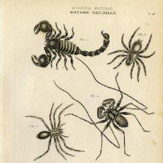 Arte: DOS GRABADOS ORIGINALES SIGLO XIX . HISTORIA NATURAL. ARÁCNIDOS. Lote 86388324
