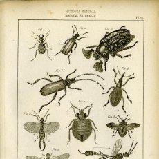 Arte: DOS GRABADOS ORIGINALES SIGLO XIX . HISTORIA NATURAL.INSECTOS. Lote 86388724