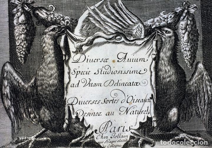 DIVERSAE AVIUM SPECIE STUDIOSISSIME AD VITAM DELINEATAE. ED. JOLLAIN. PARIS. CIRCA 1680 (Arte - Grabados - Antiguos hasta el siglo XVIII)