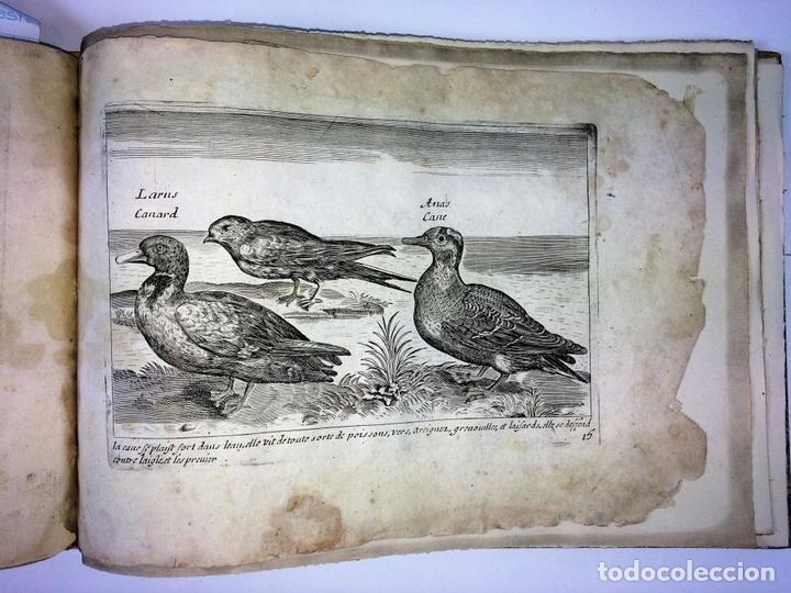Arte: DIVERSAE AVIUM SPECIE STUDIOSISSIME AD VITAM DELINEATAE. ED. JOLLAIN. PARIS. CIRCA 1680 - Foto 3 - 90037432