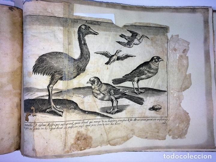 Arte: DIVERSAE AVIUM SPECIE STUDIOSISSIME AD VITAM DELINEATAE. ED. JOLLAIN. PARIS. CIRCA 1680 - Foto 4 - 90037432