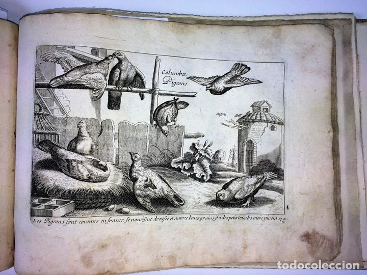Arte: DIVERSAE AVIUM SPECIE STUDIOSISSIME AD VITAM DELINEATAE. ED. JOLLAIN. PARIS. CIRCA 1680 - Foto 7 - 90037432