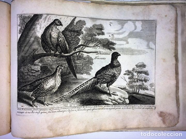 Arte: DIVERSAE AVIUM SPECIE STUDIOSISSIME AD VITAM DELINEATAE. ED. JOLLAIN. PARIS. CIRCA 1680 - Foto 8 - 90037432