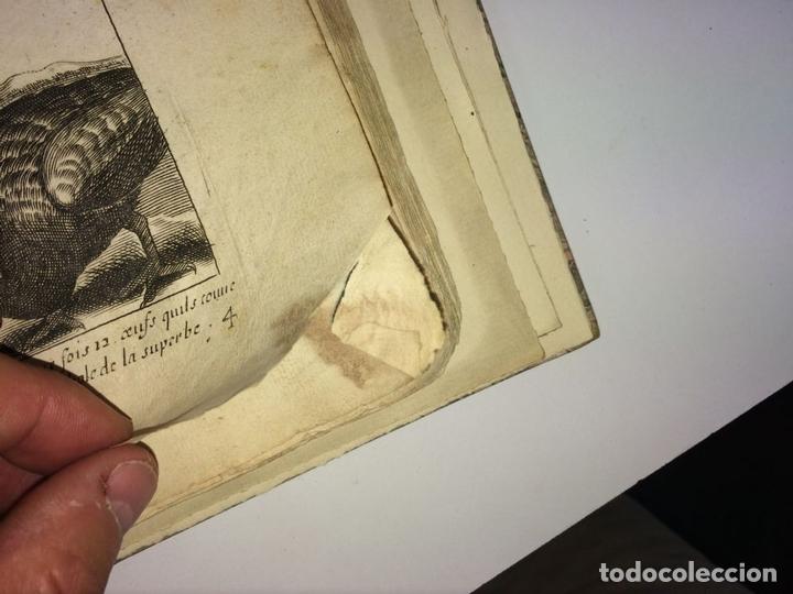 Arte: DIVERSAE AVIUM SPECIE STUDIOSISSIME AD VITAM DELINEATAE. ED. JOLLAIN. PARIS. CIRCA 1680 - Foto 10 - 90037432