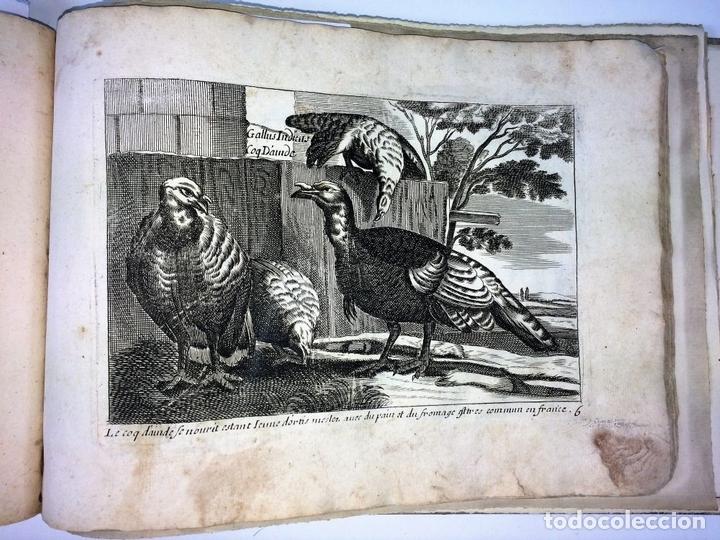 Arte: DIVERSAE AVIUM SPECIE STUDIOSISSIME AD VITAM DELINEATAE. ED. JOLLAIN. PARIS. CIRCA 1680 - Foto 12 - 90037432