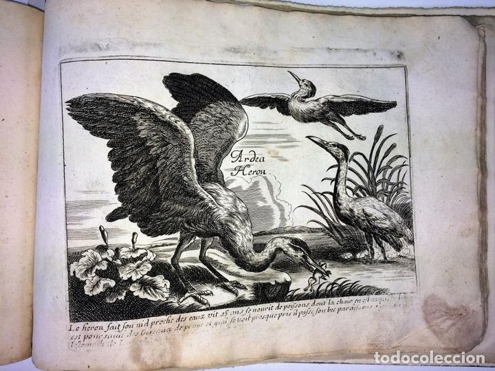 Arte: DIVERSAE AVIUM SPECIE STUDIOSISSIME AD VITAM DELINEATAE. ED. JOLLAIN. PARIS. CIRCA 1680 - Foto 15 - 90037432