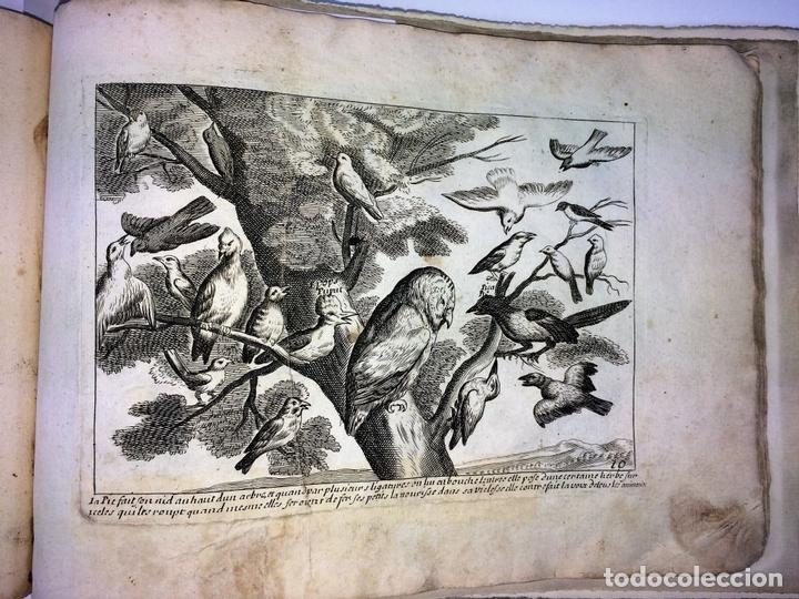 Arte: DIVERSAE AVIUM SPECIE STUDIOSISSIME AD VITAM DELINEATAE. ED. JOLLAIN. PARIS. CIRCA 1680 - Foto 16 - 90037432