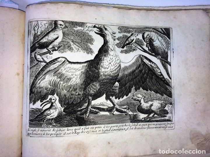 Arte: DIVERSAE AVIUM SPECIE STUDIOSISSIME AD VITAM DELINEATAE. ED. JOLLAIN. PARIS. CIRCA 1680 - Foto 17 - 90037432