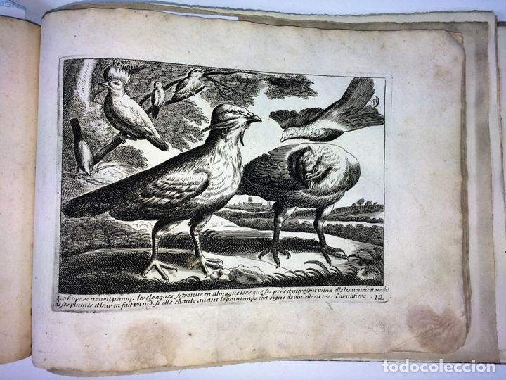 Arte: DIVERSAE AVIUM SPECIE STUDIOSISSIME AD VITAM DELINEATAE. ED. JOLLAIN. PARIS. CIRCA 1680 - Foto 18 - 90037432