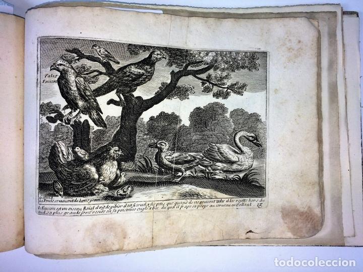Arte: DIVERSAE AVIUM SPECIE STUDIOSISSIME AD VITAM DELINEATAE. ED. JOLLAIN. PARIS. CIRCA 1680 - Foto 19 - 90037432