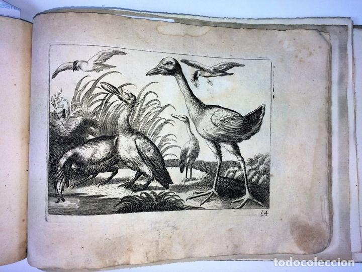 Arte: DIVERSAE AVIUM SPECIE STUDIOSISSIME AD VITAM DELINEATAE. ED. JOLLAIN. PARIS. CIRCA 1680 - Foto 20 - 90037432