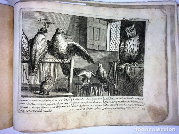 Arte: DIVERSAE AVIUM SPECIE STUDIOSISSIME AD VITAM DELINEATAE. ED. JOLLAIN. PARIS. CIRCA 1680 - Foto 21 - 90037432