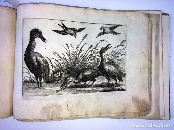 Arte: DIVERSAE AVIUM SPECIE STUDIOSISSIME AD VITAM DELINEATAE. ED. JOLLAIN. PARIS. CIRCA 1680 - Foto 22 - 90037432